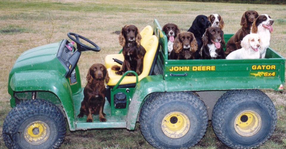 Glencoe Dogs 1998